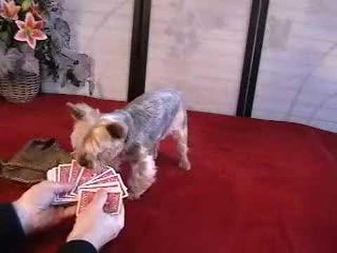 Jilli Dog poker dog passes away